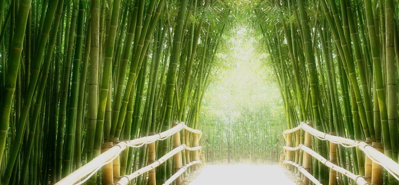 Bambus Sicherheit Hotelversicherung