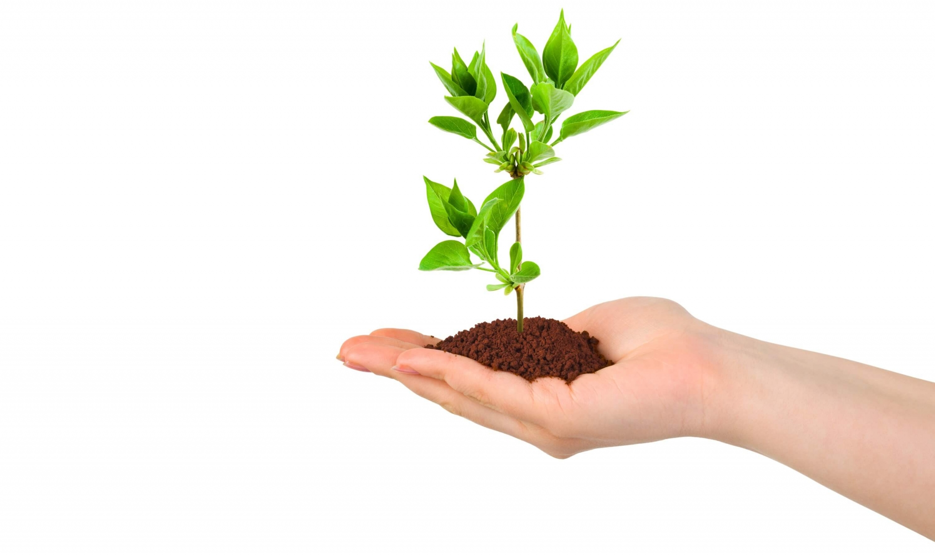 Hand Pflanze Sicherheit