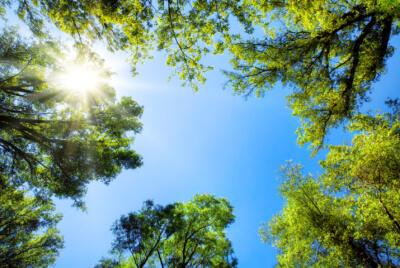 Haftung für Schäden durch Bäume