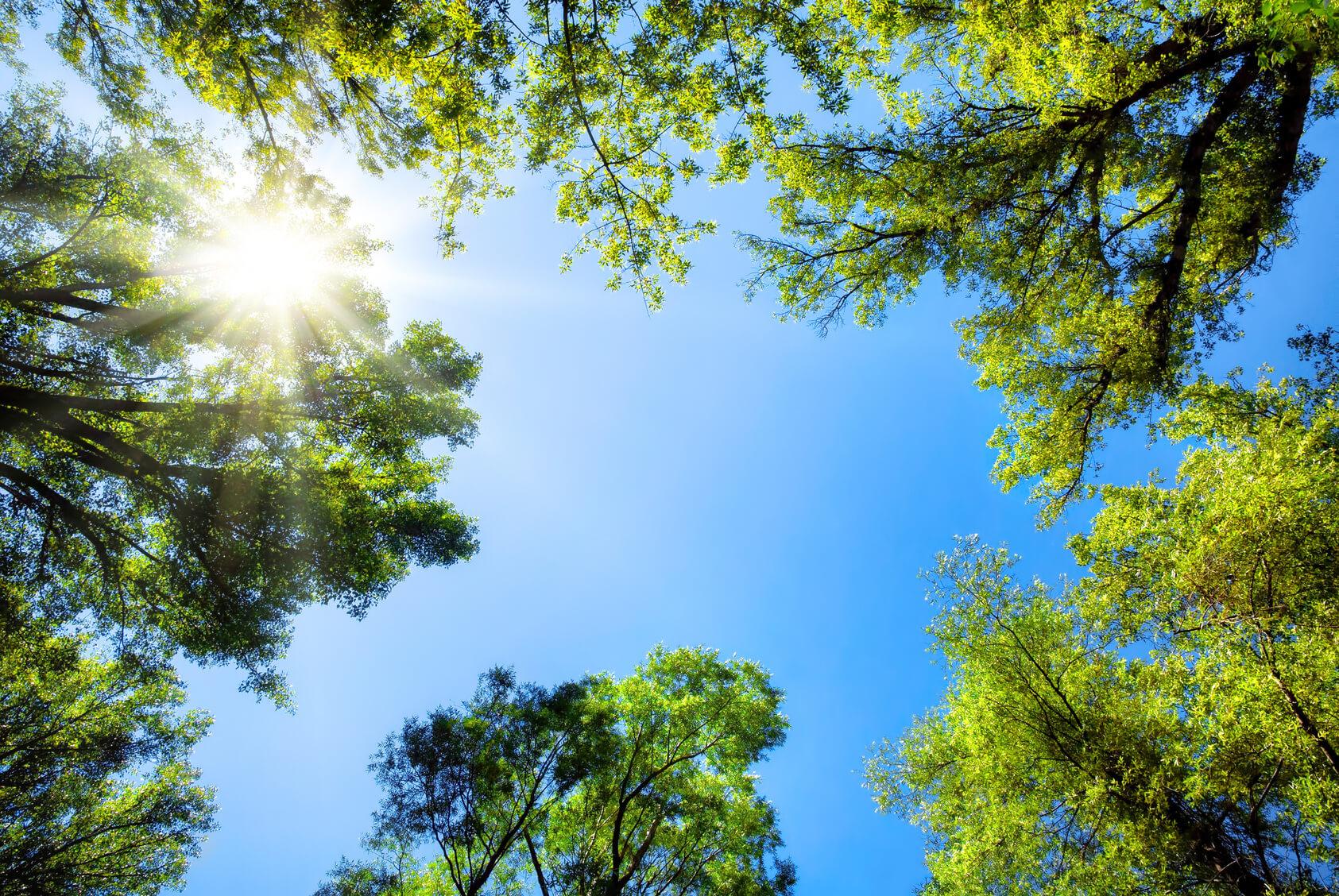 Bäume Harmonie Hotelversicherung