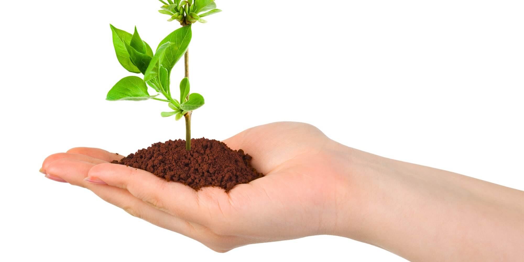 Hand mit Pflanze Kind Harmonie Hotelversicherung